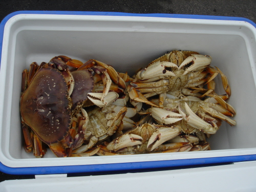 Crabs from Half Moon Bay